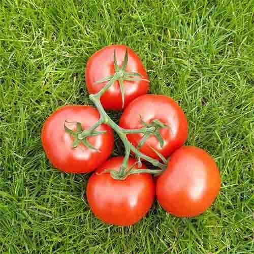Tomaten 500gr.